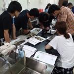 20160809森里海連環学実習6魚類解剖