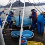 20150312春の実習緑洋丸調査