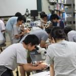 20140808森里海連環学実習 顕微鏡観察