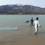 20150313春の実習稚魚採集1