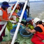 20160830海洋系実習II3