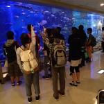 20150924 秋の実習1 魚っ知館見学