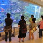 20140924魚っ知館見学