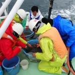20160314春の実習2 緑洋丸調査