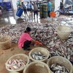 141206タイ魚市場