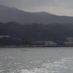 20171116舞鶴湾イルカ出現1